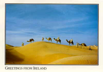 Camels in Ireland ?